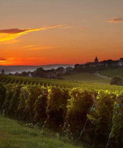 Ταξίδι στο δρόμο του κρασιού