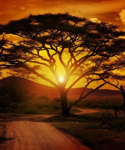 Η Κένυα είναι χώρα της Ανατολικής Αφρικής που συνορεύει νοτιοδυτικά με την Τανζανία, δυτικά με την Ουγκάντα και βρέχεται από τη λίμνη Βικτόρια, βορειοδυτικά με το Νότιο Σουδάν, βόρεια με την Αιθιοπία, βορειοανατολικά και ανατολικά με την Σομαλία και νοτιοανατολικά βρέχεται από τον Ινδικό ωκεανό. Πρωτεύουσα είναι το Ναϊρόμπι. Η Τανζανία είναι χώρα της Ανατολικής Αφρικής και συμπεριλαμβάνει τα νησιά Μάφια, Πέμπα και Ζανζιβάρη. Το 1/3 της χώρας είναι εθνικά πάρκα και καταφύγια θηραμάτων. Στο έδαφος της βρίσκεται το υψηλότερο όρος της Αφρικής, το Κιλιμάντζαρο.