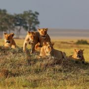Kένυα Ταξίδι
