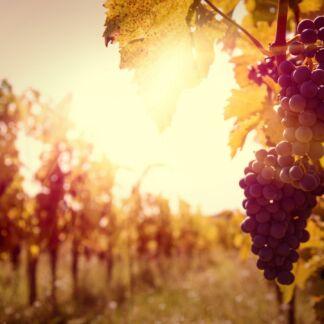 """Nemea è un comune della Grecia situato nella periferia del Peloponneso, poco distante da Corinto. A pochi chilometri a nord-est dell'attuale paese sorge il sito archeologico della Vecchia Nemea, chiamata anche Eraclea o Iraklion, in onore dell'eroe che qui compì una delle sue dodici fatiche. Nemea era già nota in tempi antichi per la fiorente produzione vinicola, tanto che Omero chiamo la zona Ampelóessa, """"colma di vini"""". Oggi la denominazione di Nemea è la più importante tra le Denominazione di Origine Controllata della Grecia meridionale, e probabilmente di tutta la Grecia. A Nemea l'Agiorgitiko, un tipo di uva a bacca rossa, è utilizzato per produrre un vino noto come Sangue di Eracle o di San Giorgio, famoso per il suo colore rosso profondo tendente al blu e al viola, per il suo aroma complesso e per il suo gusto persistente."""