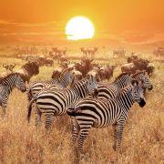 Σαφάρι στην Αφρική