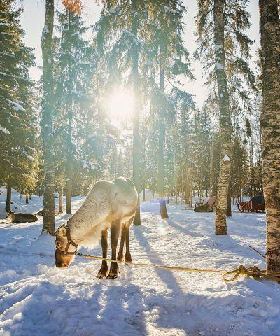 Ταξίδια στη Φινλανδία