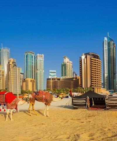 Ντουμπάι Σαφάρι Καμήλες