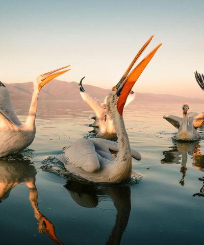 Εκδρομή Λίμνη Κερκίνη - Σέρρες